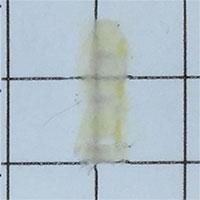 Biến xương chuột trở nên trong suốt trong phòng thí nghiệm
