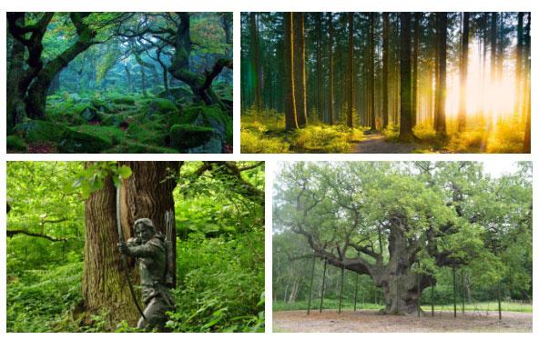 Khu rừng này gắn liền với anh hùng huyền thoại Robin Hood.