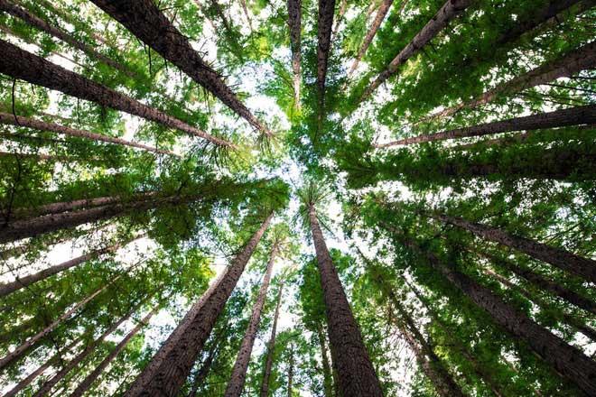 Cây có thể giúp giảm lượng carbon trong không khí.