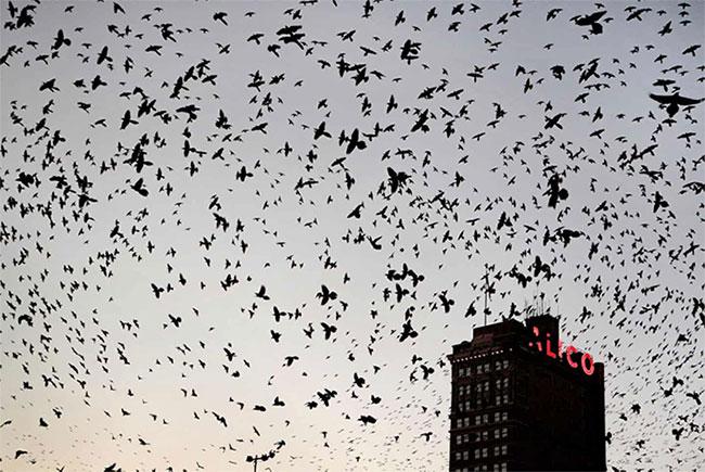 Các loài chim sống ở đồng cỏ bị ảnh hưởng nhiều nhất.