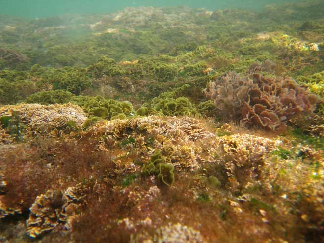 Liệu tảo có thể giữ chìa khóa cho tương lai?