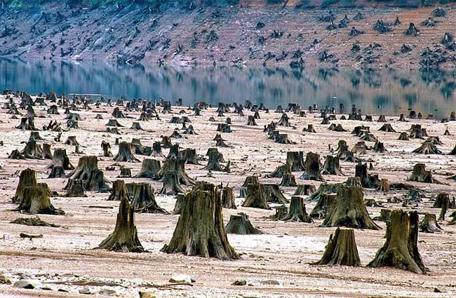 Rừng Quốc gia Willamette tại bang Oregon, Mỹ.