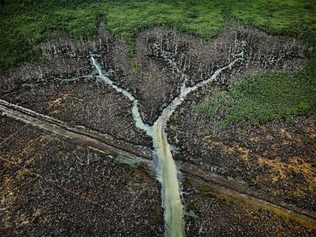 Dầu thường bị lấy trộm từ các đường ống dẫn dầu đi qua vùng đồng bằng Niger.