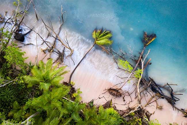 Nước biển dâng lên khi những cây dừa ở bờ biển đổ sập vì sóng kéo các lớp cát xuống biển.
