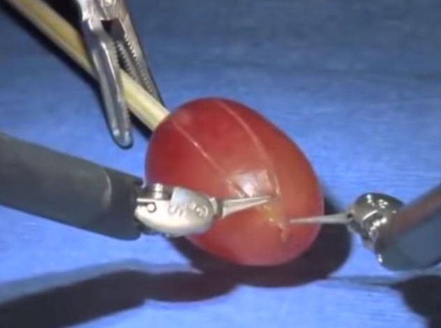 """Màn trình diễn """"mổ""""…một quả nho."""