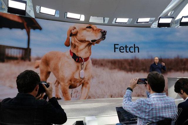 Thiết bị đeo cổ Ring Fetch, dùng để theo dõi thú cưng khi thả chúng chơi tự do.