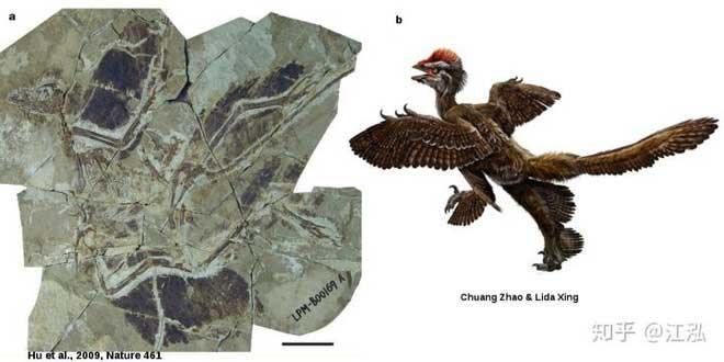 Hình ảnh phục hồi từ mẫu hóa thạch.