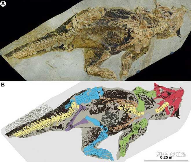Hoá thạch của loài rồng miệng vẹt.