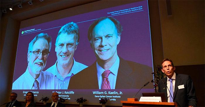 Ba nhà khoa học Kaelin, Ratcliffe và Semenza