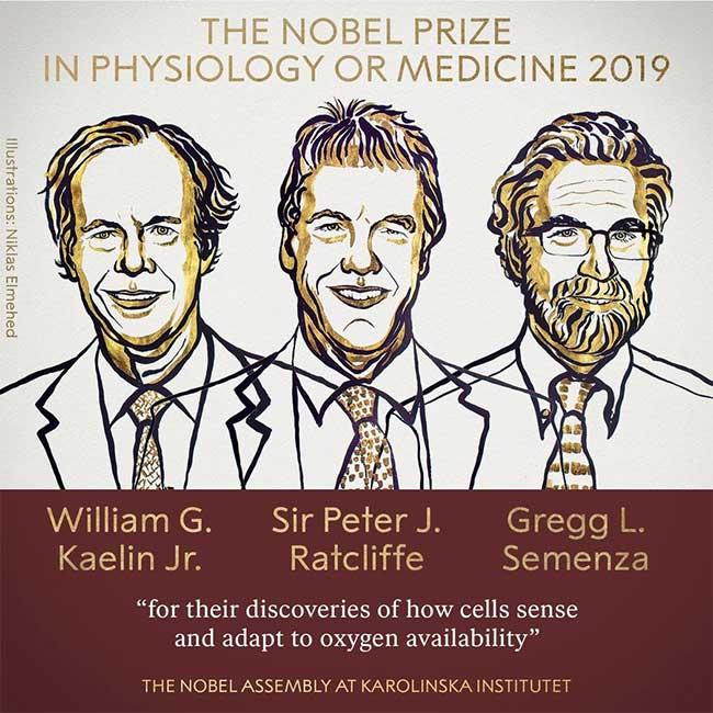 Ba nhà khoa học được trao giải Nobel Y Sinh 2019.