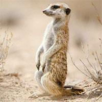 Tại sao tuyệt nhiên không có sinh vật ba chân nào trên Trái đất?