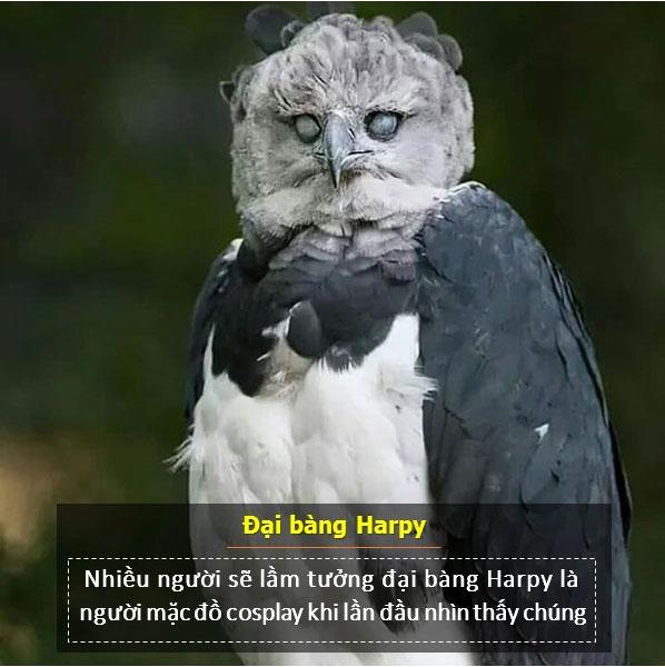 Loài chim này thực sự là một ngôi sao của mạng xã hội.