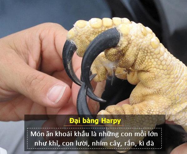 Móng vuốt của đại bàng Harpy