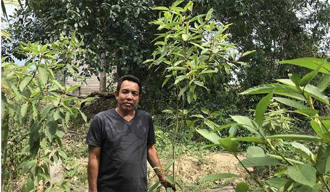 Một nông dân đứng cạnh cây Kratom trong vườn nhà.