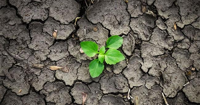 Các loại thảm thực vật khác nhau giúp cứu đất khỏi xói mòn do mưa và phong hóa