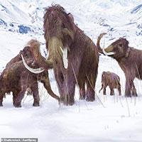 """Tiết lộ cách loài voi ma mút """"né"""" tuyệt chủng, sống thêm 10.000 năm"""