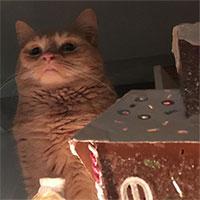 Loài mèo không hề vô tâm, trái lại còn tình cảm với người hơn cả chó