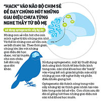 """Các nhà khoa học """"hack"""" não chim sẻ, dạy chúng hót những giai điệu chưa từng nghe thấy từ bố mẹ"""