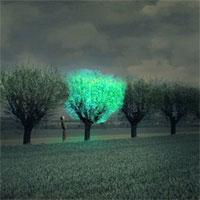 Bạn nghĩ sao về cây xanh phát sáng như đèn đường?