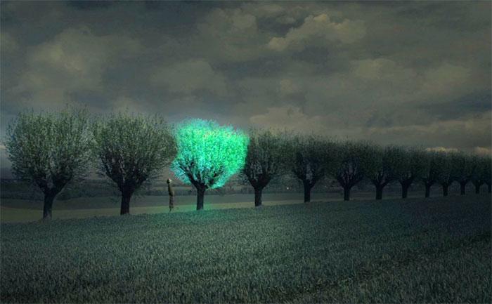 Cây xanh phát sáng