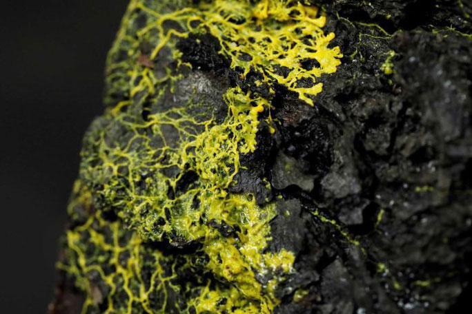 Blob - sinh vật đơn bào nhỏ, màu vàng.