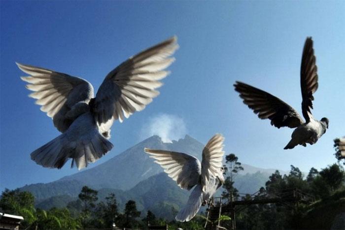 Núi lửa Merapi