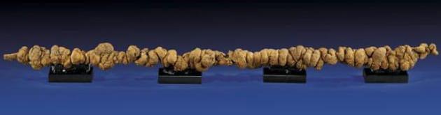 Hóa thạch phân dài hơn 1 m