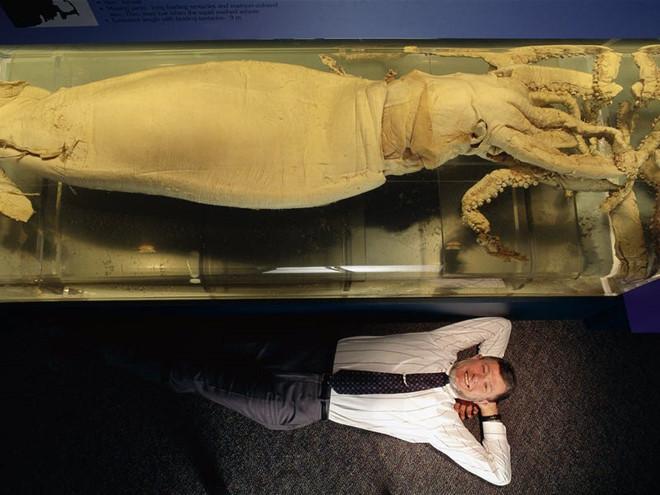 Dù đã xuất hiện nhiều lần trên camera, các nhà khoa học nhận định mực khổng lồ vẫn còn là một loài vật đầy bí ẩn