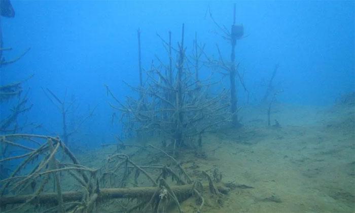 Hàng triệu năm trước, nhiều cây cổ đại có thể bị nước lũ cuốn trôi ra biển.