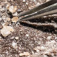 Phát hiện dấu vết sự sống trong hố thiên thạch 375 triệu năm