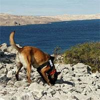 Chó đánh hơi phát hiện 6 ngôi mộ 3.000 năm tuổi