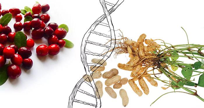 Số loài thực vật biến đổi gene tự nhiên hơn nhiều so với ước tính trước đây