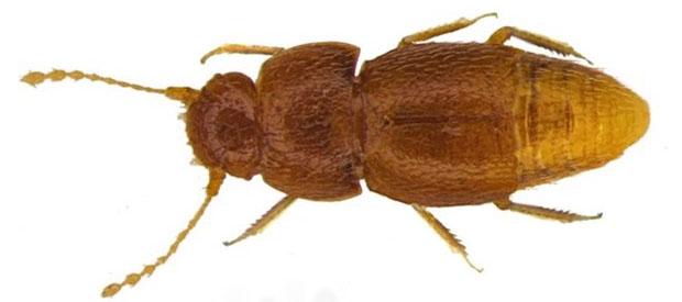 Loài bọ hung được mang tên Greta Thunberg.