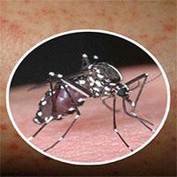 Chỉ cần 1 người trong nhà bị sốt xuất huyết, thực hiện ngay 4 biện pháp sau để không ai bị lây bệnh