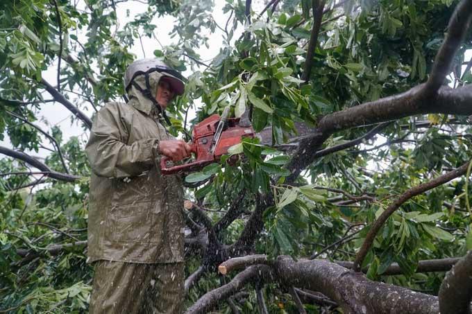 Công nhân môi trường TP Quy Nhơn dọn cây xanh, khắc phục sự cố sau bão.