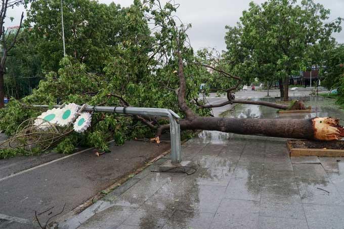 Cột điện, cây xanh bị gió bão quật đổ trên đường phố Quy Nhơn.