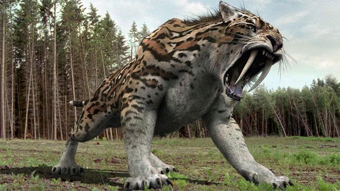 Hổ răng kiếm tuyệt chủng khoảng 13.000 năm về trước.