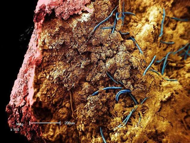 Sự sống nguyên thủy có thể bắt nguồn và phát triển trong lòng đất.
