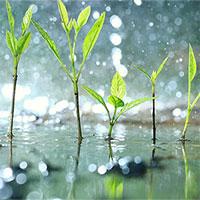 """Thực vật biết… """"hoảng loạn"""" khi trời mưa to"""