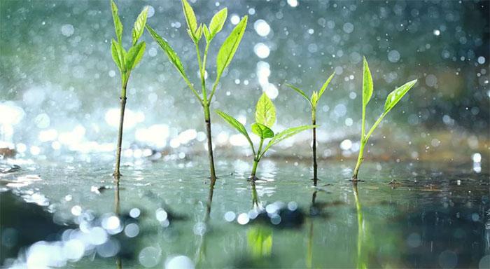 """Thực vật thực tế cũng biết """"sợ"""" khi trời mưa."""