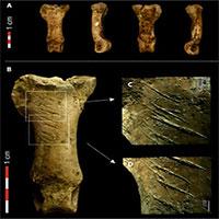 Dấu vết vòng cổ bằng vuốt đại bàng 40.000 năm tuổi