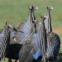 """""""Xã hội chim"""" phức tạp đầu tiên trên thế giới"""
