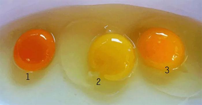 Lòng đỏ trứng màu vàng nhạt và cam đậm đều có cùng một lượng protein và chất béo