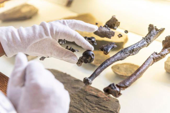 Các nhà khoa học đang thao tác trên các mẫu vật