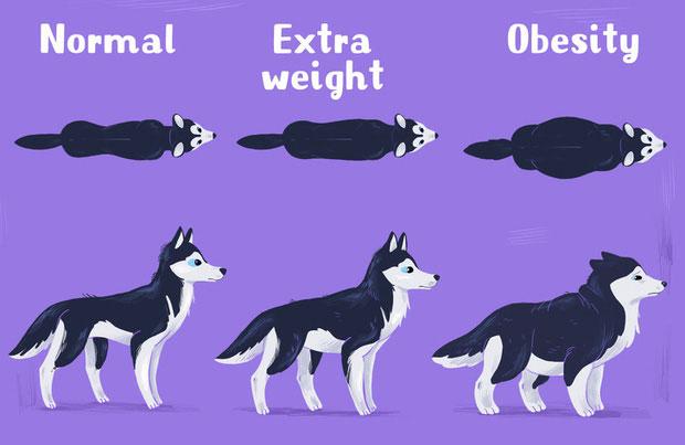 Nuôi quá béo