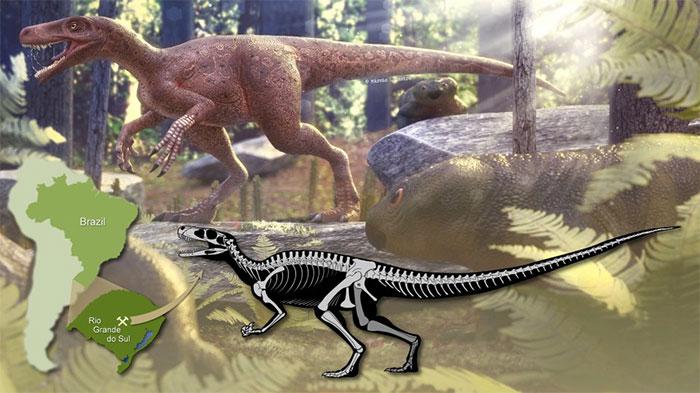 Hình ảnh phục dựng loài Gnathovorax cabreirai dựa trên hóa thạch gần như hoàn chỉnh.