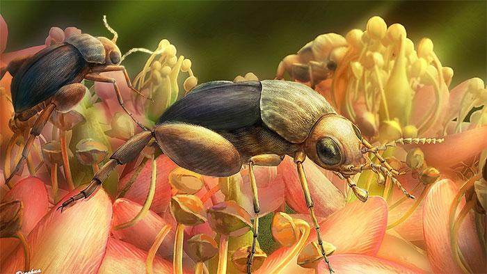 Bọ cánh cứng A. burmitina hút mật và phấn hoa Eudicots.