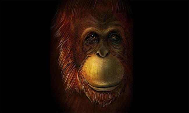 Hình dáng phục dựng của Gigantopithecus blacki.