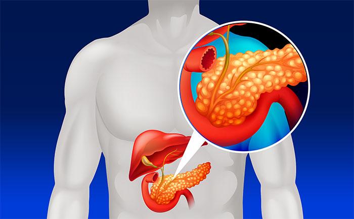 Tuyến tụyTuyến tụy nằm ở phía sau dạ dày, hỗ trợ tiêu hóa bằng cách tiết ra chất dịch đặc biệt.
