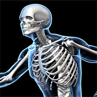 13 điều lý thú về bộ xương người